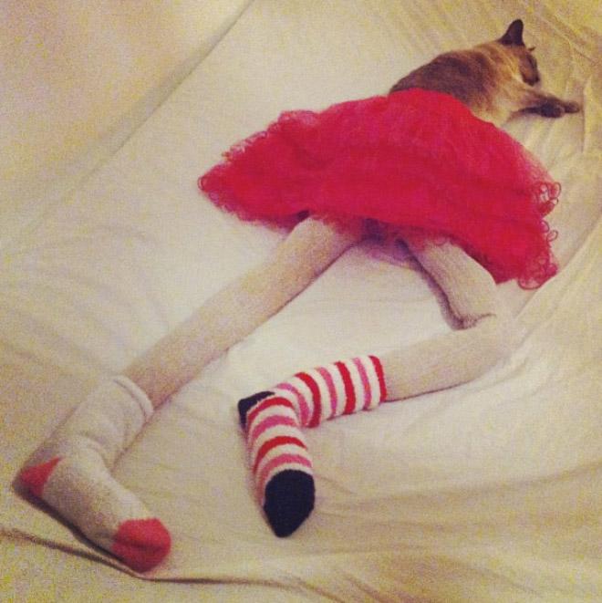 кошка в юбке