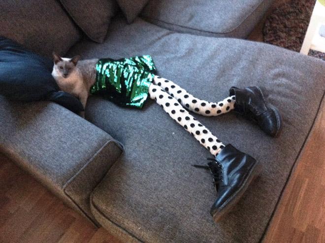 кошка в ботинках и колготах