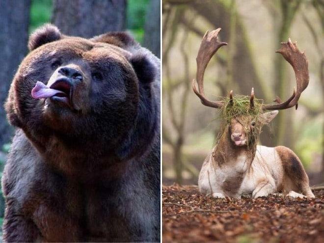 медведь и лось