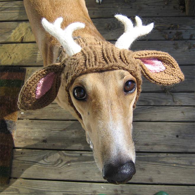 пес в шапке