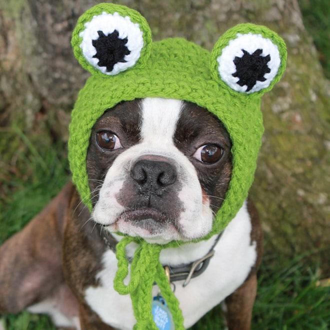 пес в шапке-лягушке