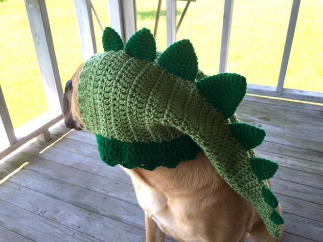 собака в шапке-динозавре