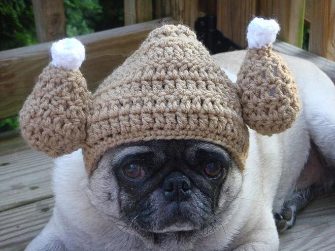 мопс в вязаной шапке