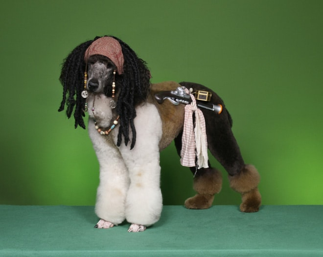 собака пират