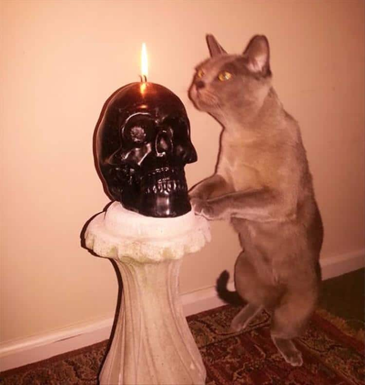 кошки чистое зло4