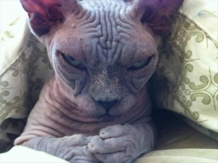кошки чистое зло8