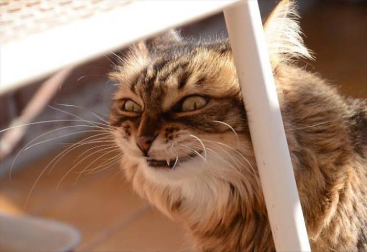 кошки чистое зло7