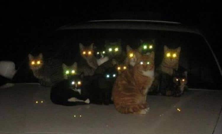 кошки чистое зло6