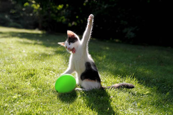 котенок и шарик