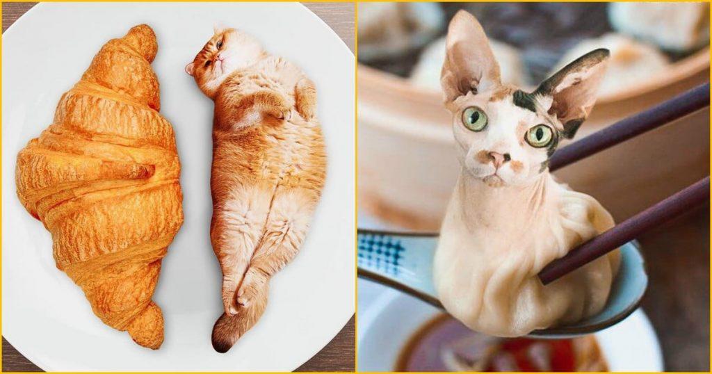 Двойное удовольствие! Девушка из России с помощью фотошопа делает смешные картинки с едой и котами