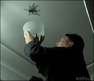 большой ужасный паук
