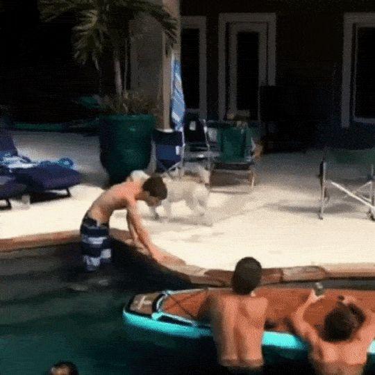 собака и бассейн