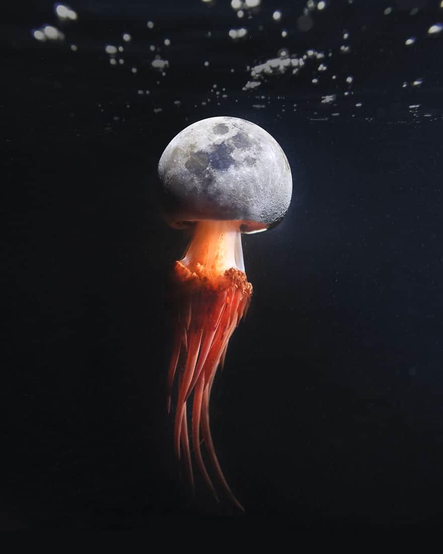 медуза иллюзия