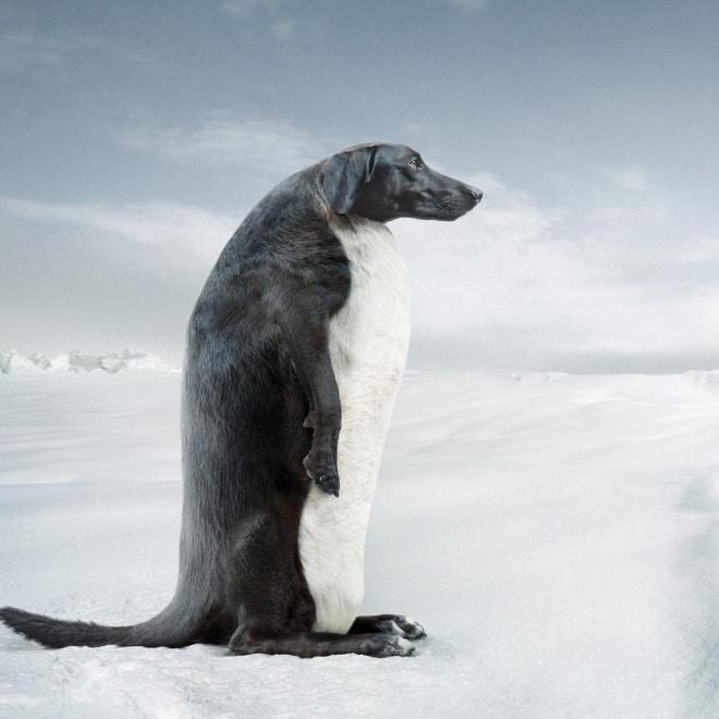 пингвин фотошоп