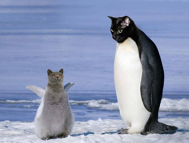 коты пингвины