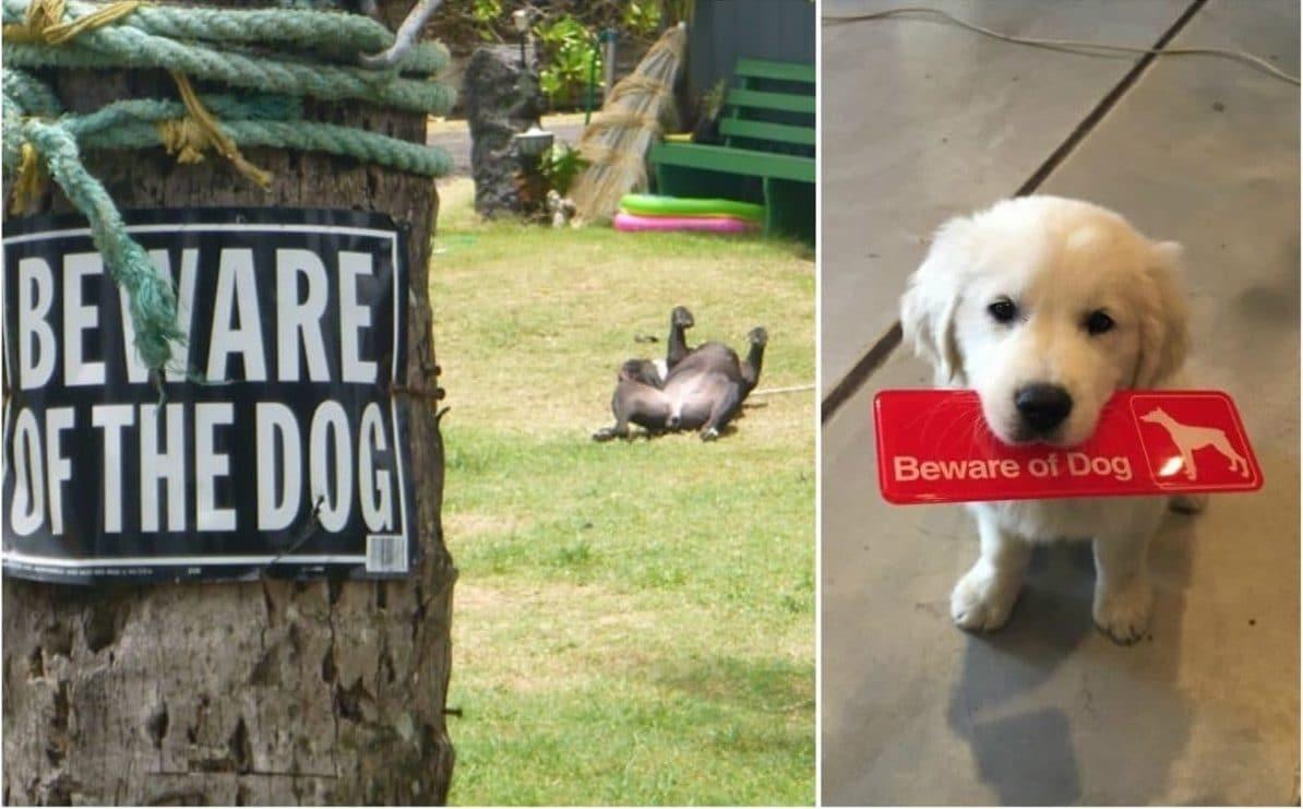 осторожно, во дворе злая собака