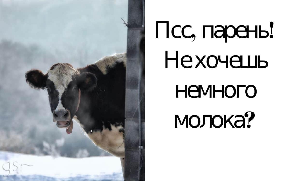 животные мемы