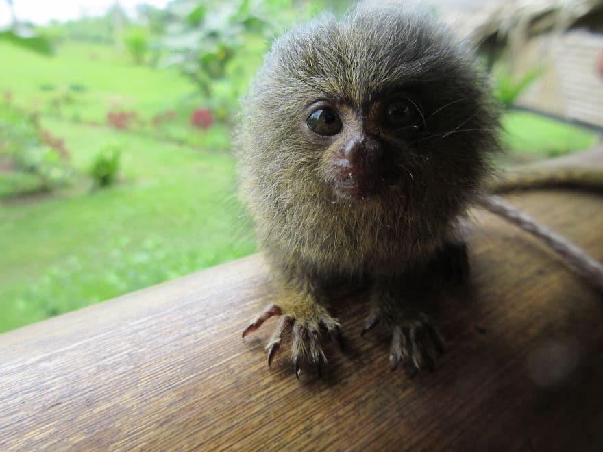 Животные Южной Америки1