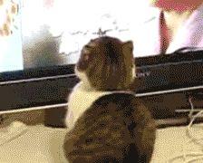 кот gif