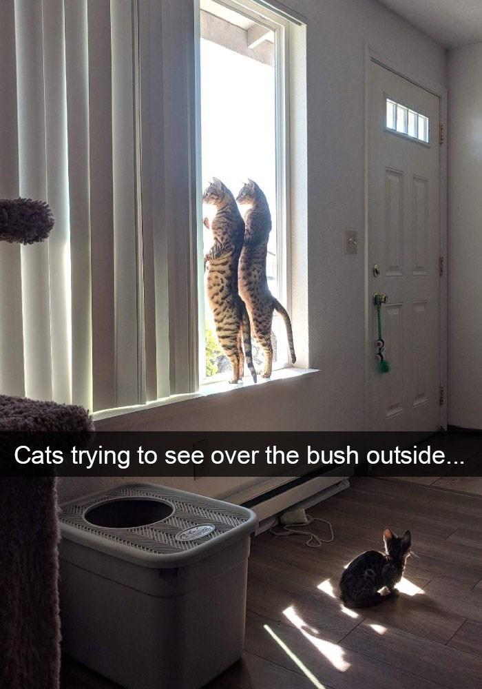 коты стоят на подоконнике