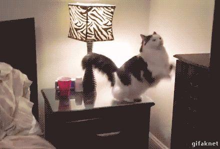 кошка gif