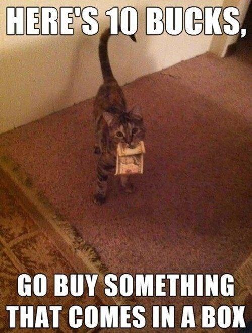 кот с деньгами в зубах