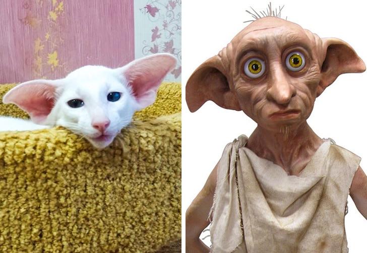 белый кот и добби из гарри поттера