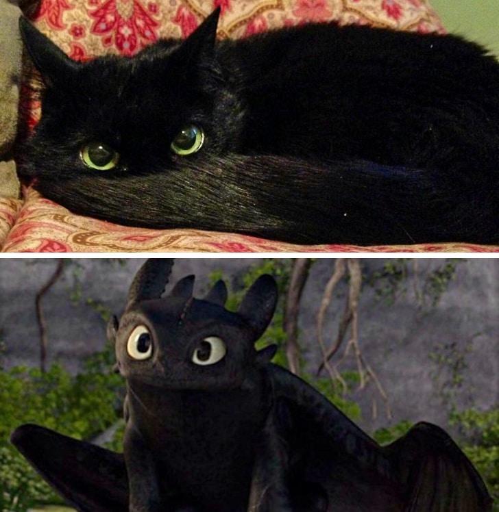 черная кошка ночная фурия из мультика