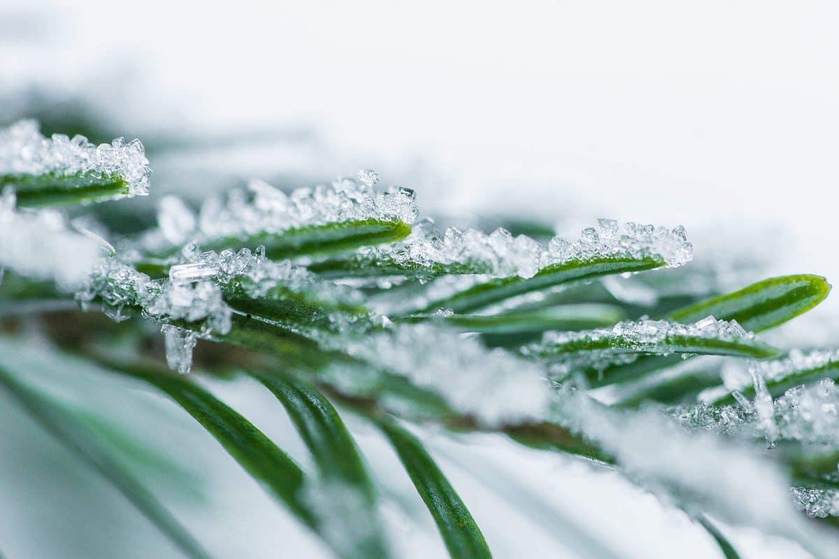 9 чудесных фото, напоминающих о прелестях зимы