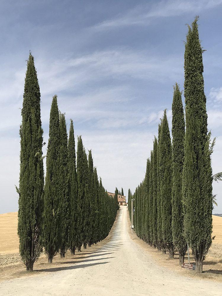 фото деревья айфон