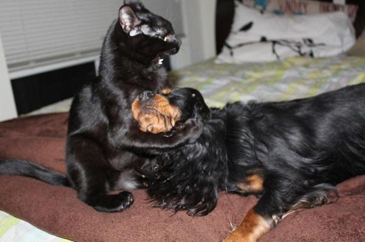 черный кот и собака