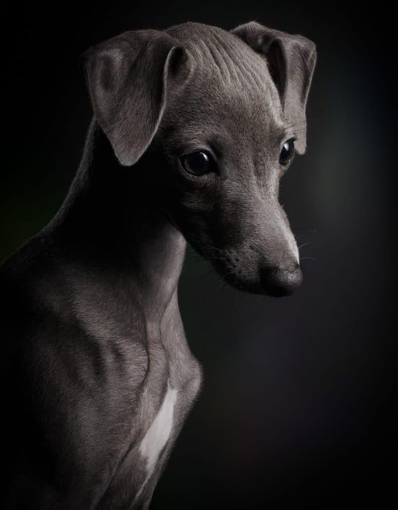 фото собака портрет