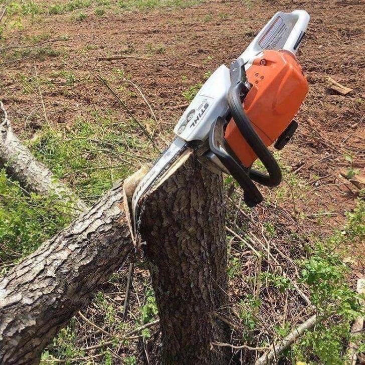 сломанная пила застряла в дереве