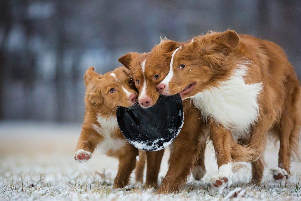 фото собаки играют