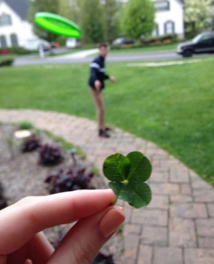 листок клевера в руке