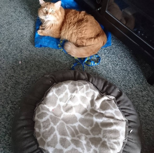рыжий кот на полу