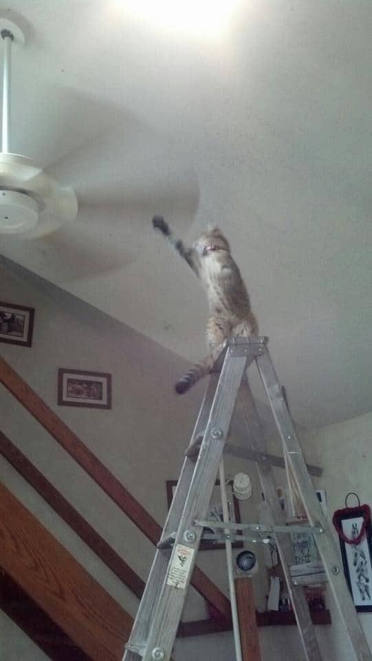 кот на лестнице