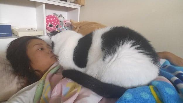 бело-черная кошка сидит на девушке