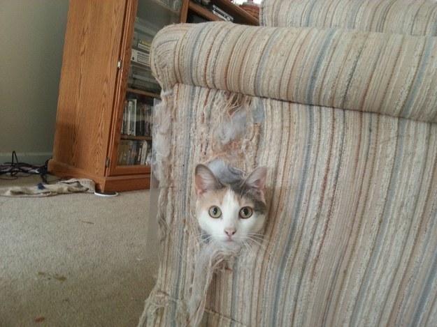 кот в диване
