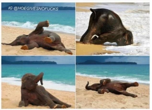 слон на пляже