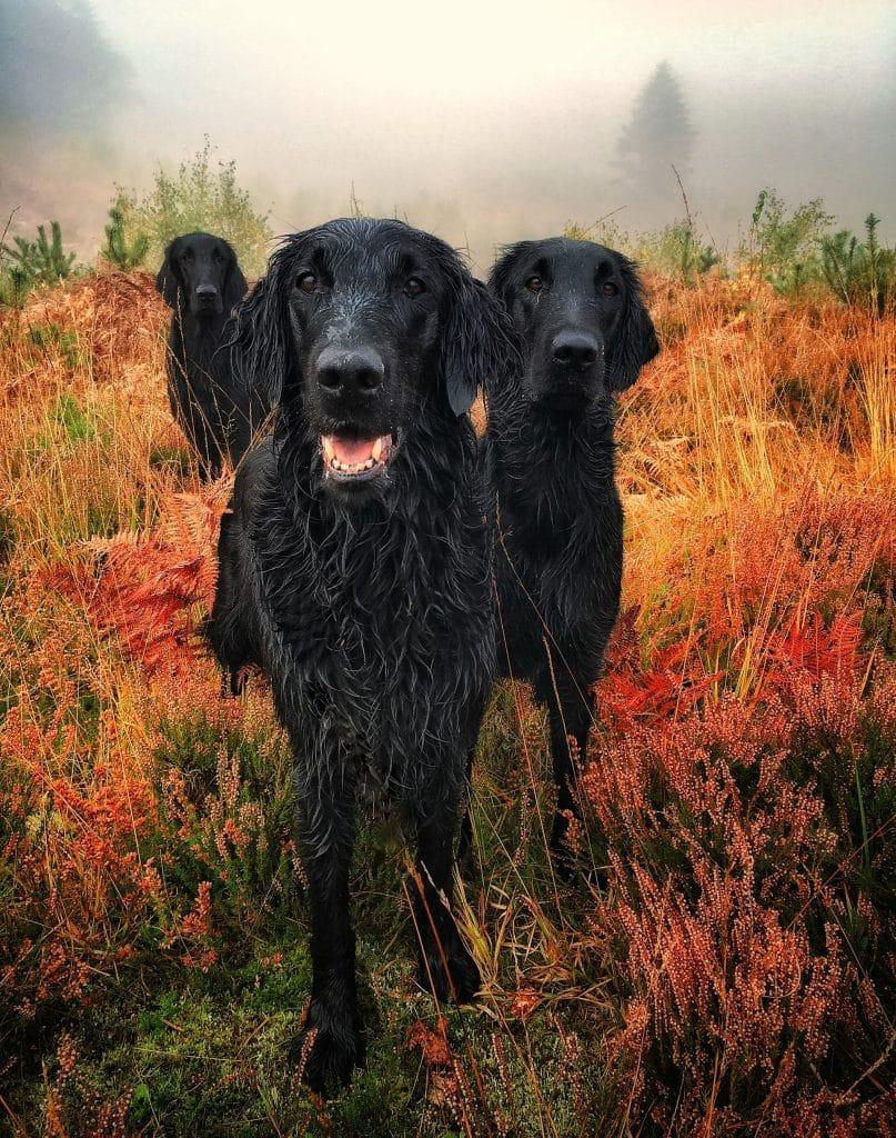 фото черных собак