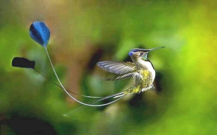 птица в полёте