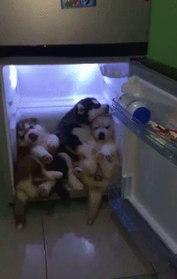щенки в холодильнике