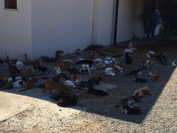 животные в тени
