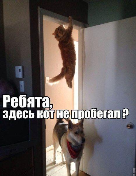мемы с котами