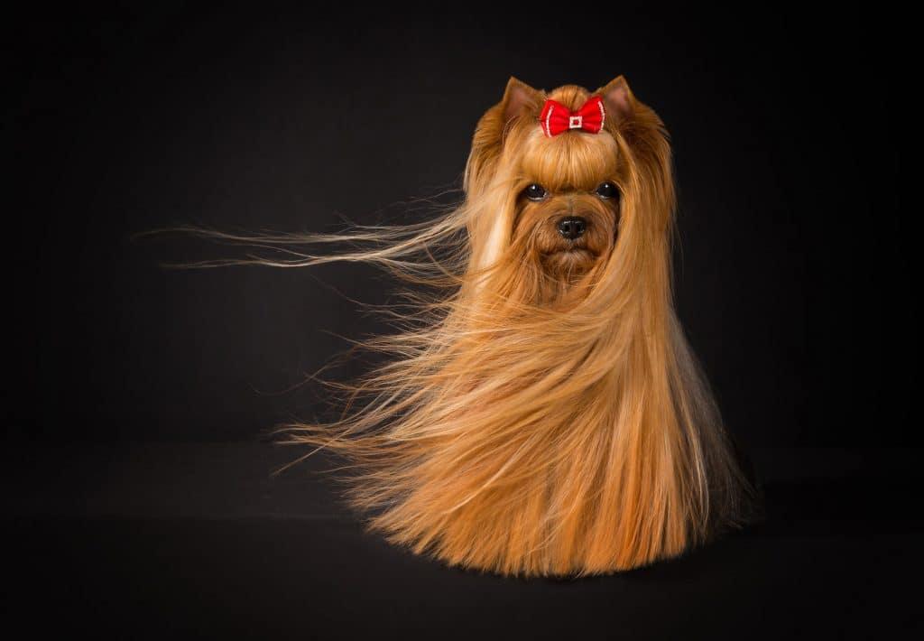 фото красивой собаки