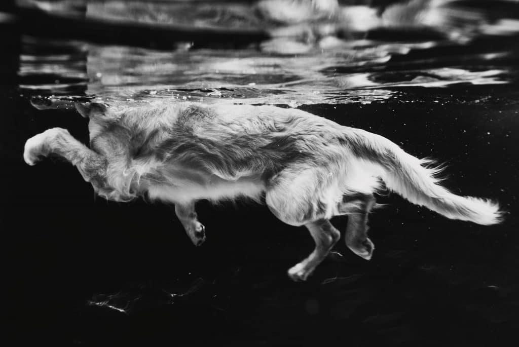 фото плавающей собаки