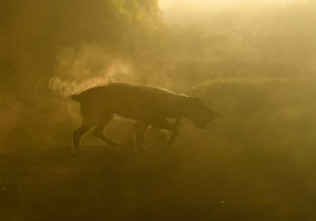 фото собаки в тумане