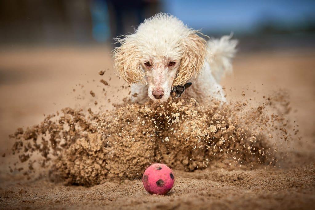 фото бегущей собаки