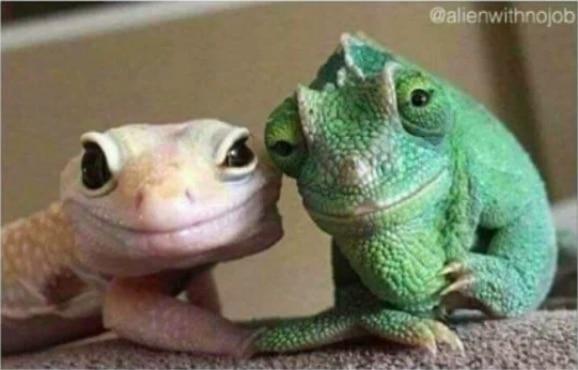 ящерица и хамелеон